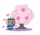 せい坊(桜と) (640x562)